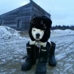 Un chien russe