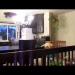 Les chats, savent-t-il sauter ?