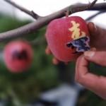 Comment faire des motifs sur les pommes