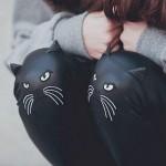 Des chats sur les genoux