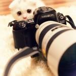 Mignon petit photographe