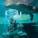 Nager avec un crocodile