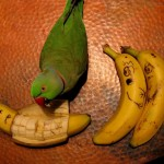 Ne regardez pas ce massacre de banane
