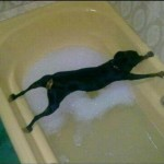 Pas de bain !!!