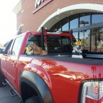 Transport de chiens en sécurité