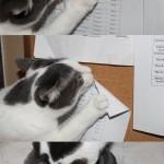 Un chat troll