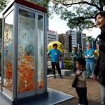 Des poissons dans une cabine téléphonique
