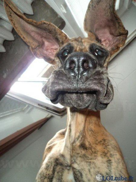 Drôle de look ce chien ! - Images drôles - LOLtube