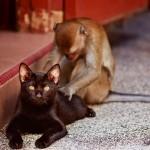 Massage de dos par un singe