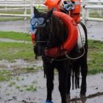 Un cheval en tuba, palmes et bouée