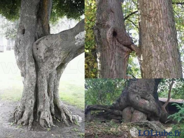 De la naissance des arbres