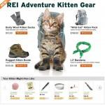 Le kit de survie pour chaton aventureux