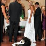 Un chien à un mariage