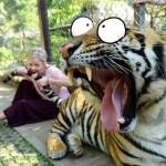 Aoutch le tigre