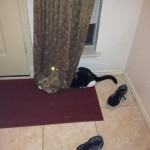 Chat effrayant