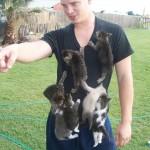 Invasion de chatons