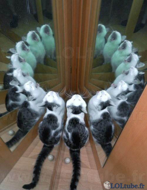 Invasion de chats