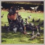 L'attaque des pigeons