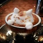 Un chat dans le café