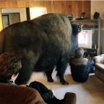 Avec son animal de compagnie devant la télé