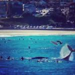 Baleine joueuse