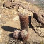 Cactus bit