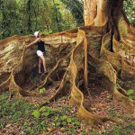 Des drôles de racines