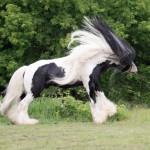 Les cheveux au vent