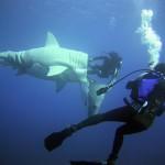Caché dans un requin