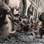 Les rats quittent les égouts