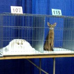 Une bouse et un chat moche