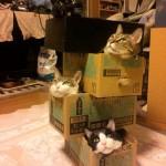 La boite à chats