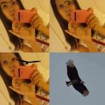 T'as un aigle entre les yeux