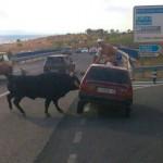 Taureau sur l'autoroute