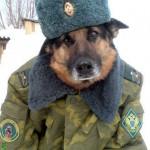 Les chiens en russie