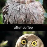 L'effet du café