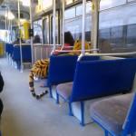 Mon tigre dans le bus