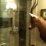 On vous observe sous la douche