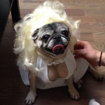 Marylin monroe pour chien