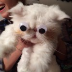Pauv chat