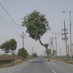 Un arbre sur la route