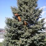 Un chien qui grimpe aux arbres