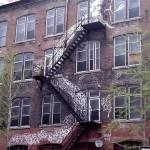 Un serpent sur l'immeuble