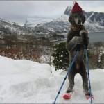 Chien skieur