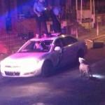 Chien vs policiers