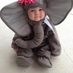 Bébé éléphant si mignon