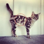 Un chat sur un chat