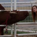 Deux vaches ...