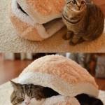 Hamburger de chat