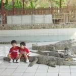 Assis sur les crocodiles